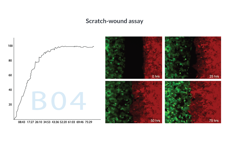 Scratch-wound assay