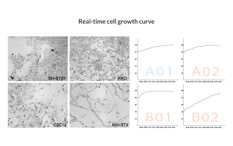 Real-time cell growth curve